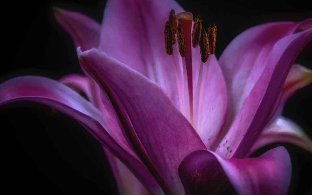 Vision of the Lily Cont.