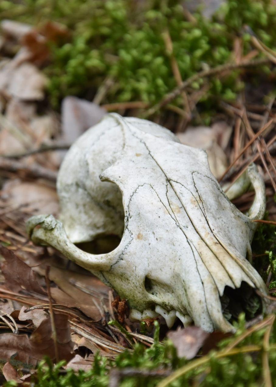 12/3/2020 – Prophesy Dry Bones to Life